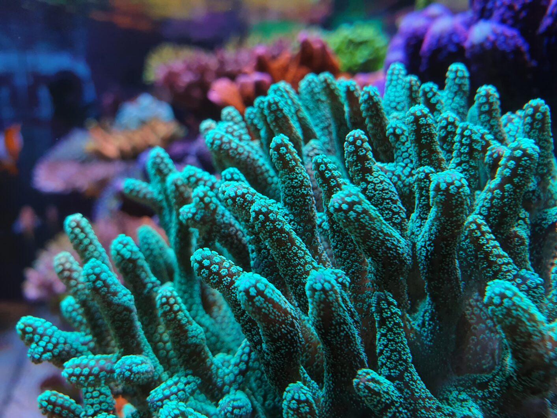 beautiful coral close-up photo