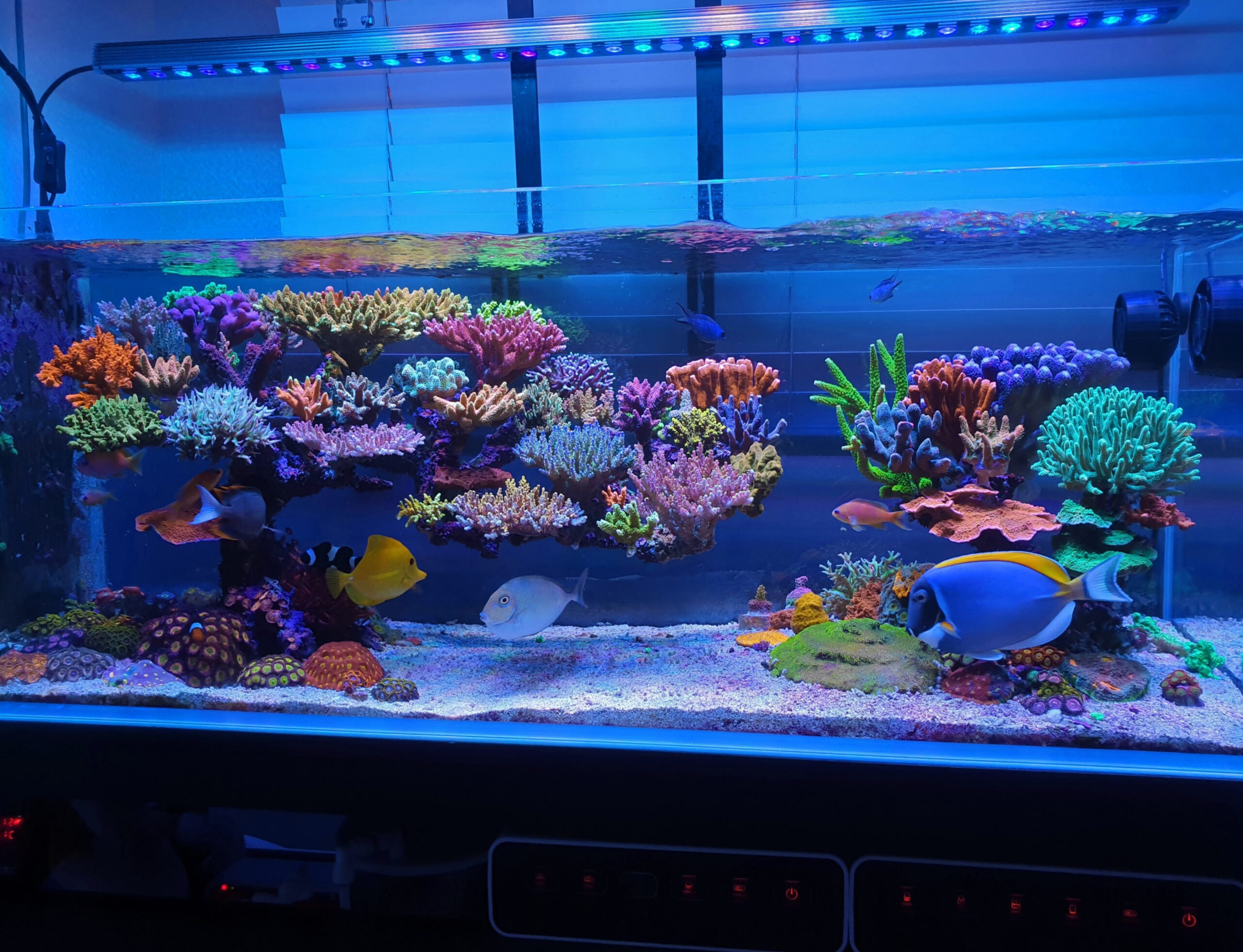reefscaping_atlantikV4_and_OR3_Blue_Plus